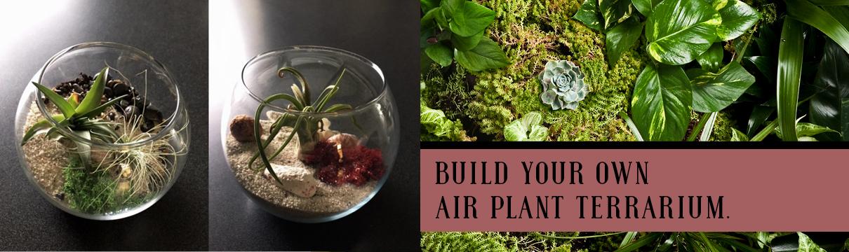 Build You Own Air Plant Terrarium.